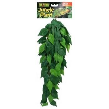 Plante ficus pour terrarium - exo terra - m