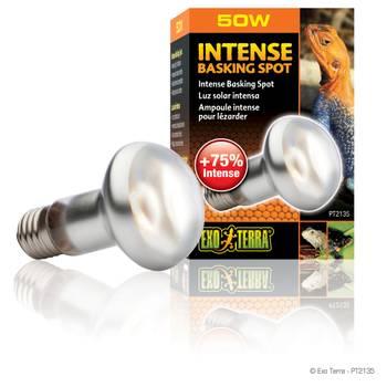 Lampe intense basking spot - exo terra - 50w